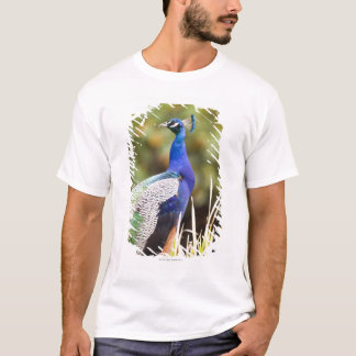 T-shirt Plan rapproché d'un paon