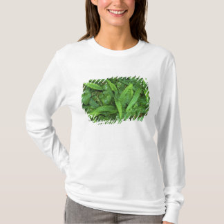 T-shirt Plancher de forêt, forêt tropicale de Quinault, NP