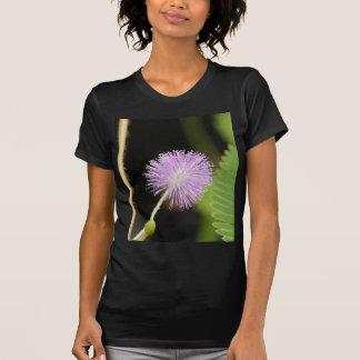 T-shirt Plante sensible (pudica de mimosa)