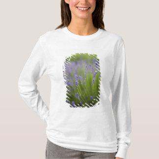 T-shirt Plantes 2 de lavande
