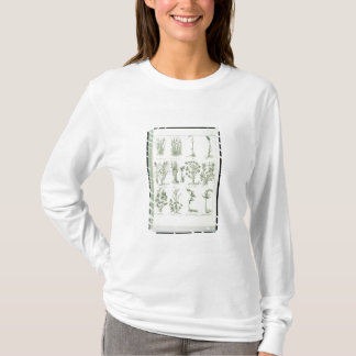 T-shirt Plantes du médecin anglais et élém. de Culpeper