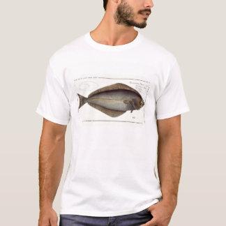 T-shirt Plat XLVII franc de flétan (Hippoglossus de
