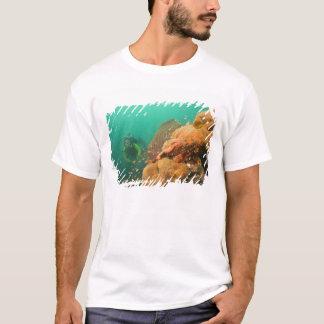 T-shirt plongeur autonome et rascasse Scorpanopsis