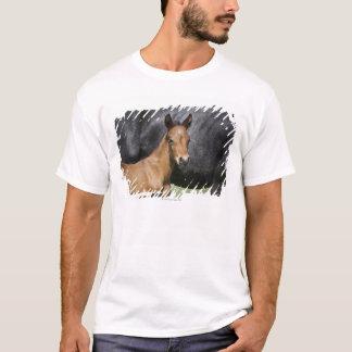 T-shirt portrait de poulain brun