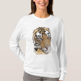 T-shirt Portrait de tigre de Bengale royal, Ranthambhor 4