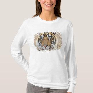 T-shirt Portrait de tigre de Bengale royal, Ranthambhor 6