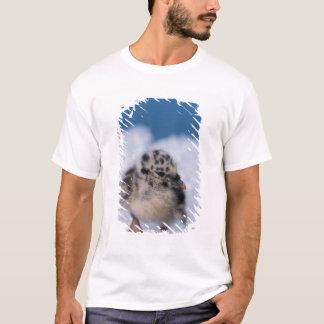 T-shirt poussin de mouette de muw, canus de Larus, sur
