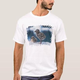 T-shirt poussins de mouette de muw, canus de Larus, sur un