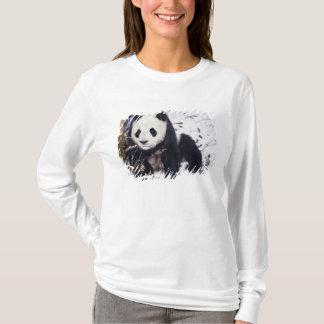T-shirt Province de l'Asie, Chine, Sichuan. Panda géant