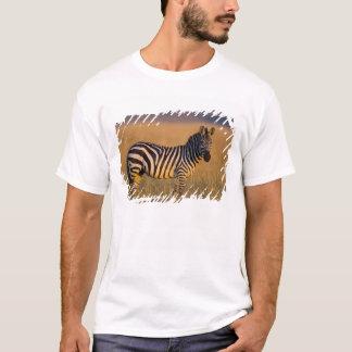 T-shirt Quagga d'Equus de zèbre de plaines) dans l'herbe,