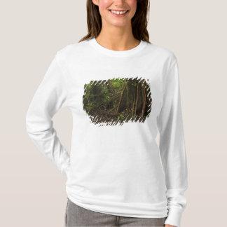 T-shirt Racines de contrefort. Forêt tropicale, Mapari