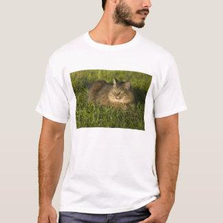 T-shirt Ragondin du Maine (la plus grande race des chats