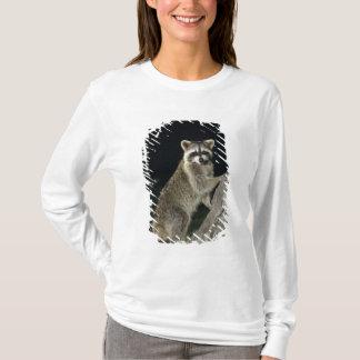 T-shirt Raton laveur du nord, lotor de Procyon, adulte à
