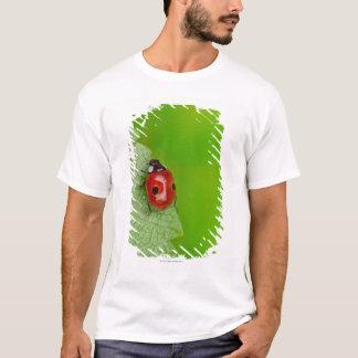 T-shirt Rayon de soleil au-dessus de la coccinelle