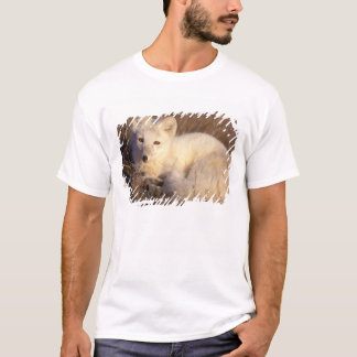 T-shirt renard arctique, lagopus d'Alopex, manteau