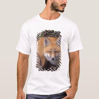 T-shirt renard rouge, vulpes de Vulpes, dans des couleurs