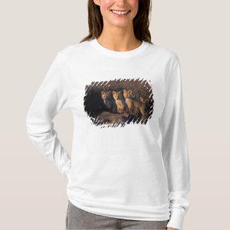 T-shirt renard rouge, vulpes de Vulpes, kits en dehors de