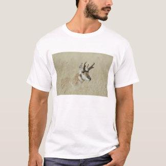 T-shirt Repos masculin de Pronghorn, Yellowstone NP,