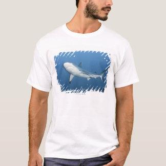 T-shirt Requin gris de récif (amblyrhynchos de