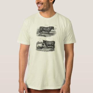 T-shirt Rétros taureaux de vache de Taureau à illustration