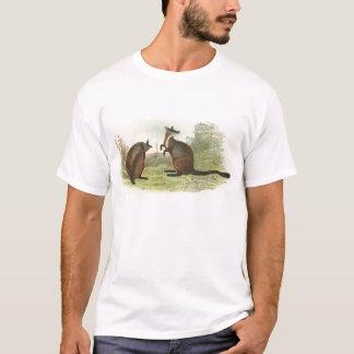 T-shirt Richard Lydekker - Roche-Wallaby Brosse-Coupé la