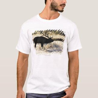 T-shirt Rivière de Madison, Yellowstone NP, Wyoming,