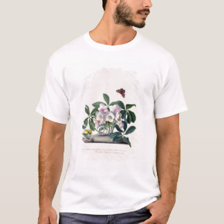 T-shirt Rose de Noël (Helleborus Niger) et hiver Aconi