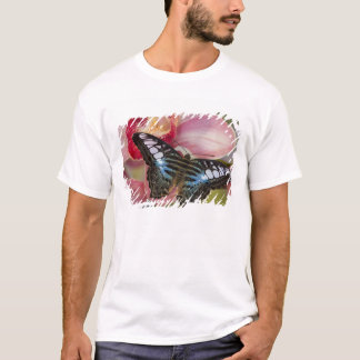 T-shirt Sammamish, papillon tropical 2 de Washington