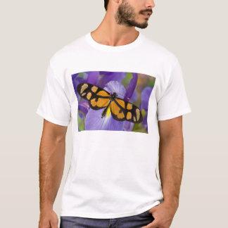 T-shirt Sammamish, papillon tropical 34 de Washington