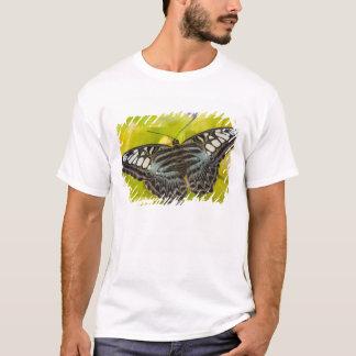 T-shirt Sammamish, papillon tropical 38 de Washington