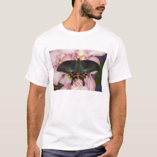 T-shirt Sammamish, papillon tropical 41 de Washington