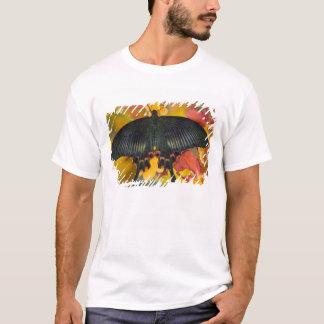 T-shirt Sammamish, papillon tropical 42 de Washington
