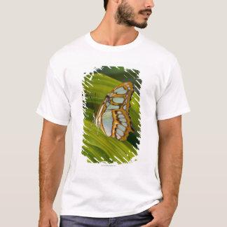 T-shirt Sammamish, Washington, Etats-Unis
