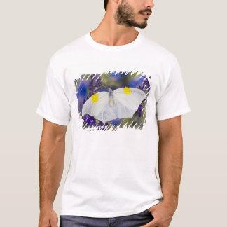 T-shirt Sammamish, Washington. Papillons tropicaux 13