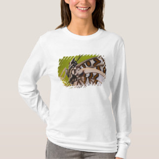 T-shirt Sammamish, Washington. Papillons tropicaux 23