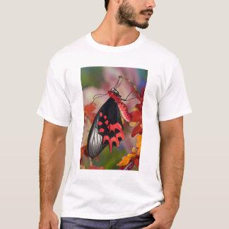 T-shirt Sammamish, Washington. Papillons tropicaux 3