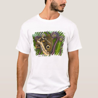 T-shirt Sammamish, Washington. Papillons tropicaux 31