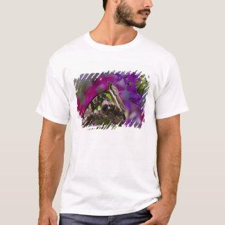 T-shirt Sammamish, Washington. Papillons tropicaux 45