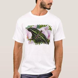 T-shirt Sammamish, Washington. Papillons tropicaux 46