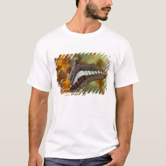 T-shirt Sammamish, Washington. Papillons tropicaux 51