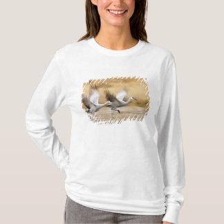 T-shirt Sandhill tend le cou des adultes de canadensis de
