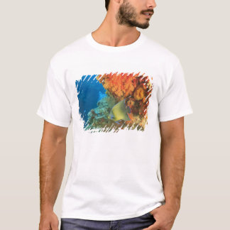 T-shirt Scalaire nageant près du corail mou orange, Bligh