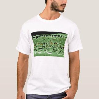 T-shirt Section transversale de feuille