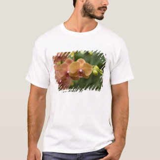 T-shirt Singapour Sanskrit pour la ville de lion).
