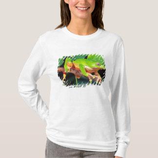 T-shirt Singe bicolore géant Treefrog, Phyllomedusa