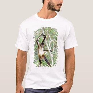 T-shirt Singe d'araignée au zoo de Belize