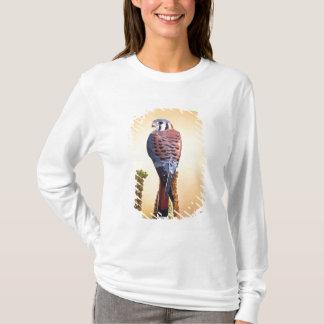 T-shirt Sparverius de crécerelle, de Falco, indigènes aux