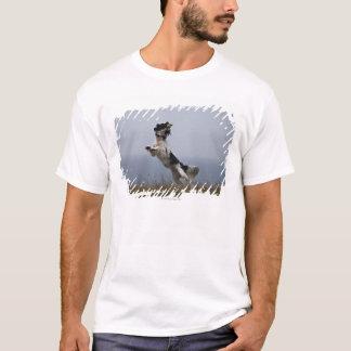 T-shirt springer spaniel noir et blanc jouant avec