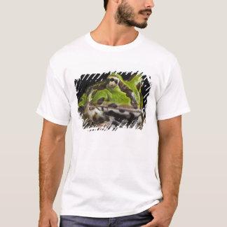 T-shirt Stolzmanni à cornes Pacifique de Ceratophrys de