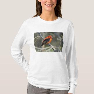 T-shirt Tanager d'écarlate masculin, olivacea de Piranga